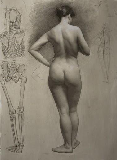 anatomie - Accueil - OCA Bonneville